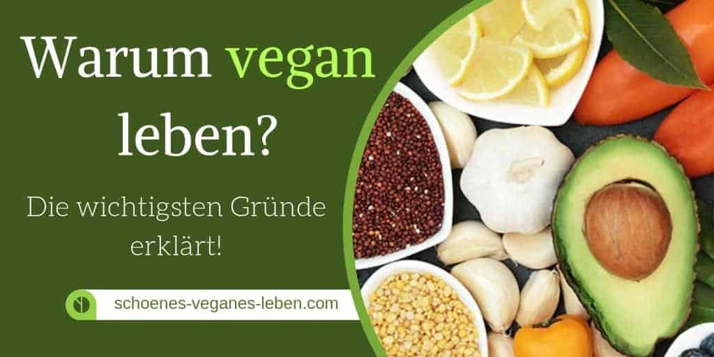 Warum vegan leben? Die wichtigsten Gründe erklärt!