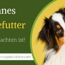 Veganes Hundefutter – Auf was bei veganem Hundefutter zu achten ist