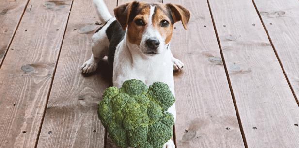Können Hunde sich vegan ernähren?