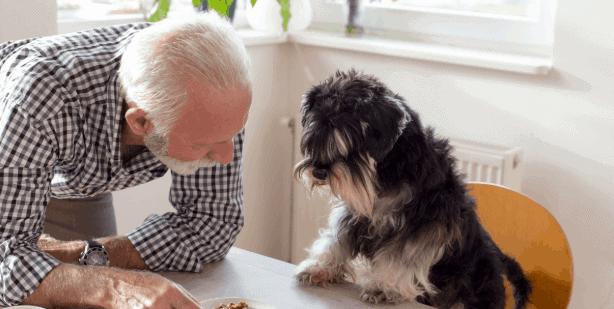 Worauf Sie beim veganen Hundefutter achten sollten